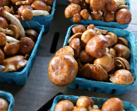 stipe: Nameko mushroom, Pholiota nameko, edible mushroom with shining, orange yellow, nearly brown, sticky, hemishperical cap and white stipe, popular in Japanese cousine, used in soups, stirfried, cooked
