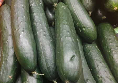 cucumis sativus: Slicing cucumber, Cucumis sativus, cultivar with long, thick fruits with dark green tough skin turning bitter with age, consumed young and sliced, or peeled and sliced when older