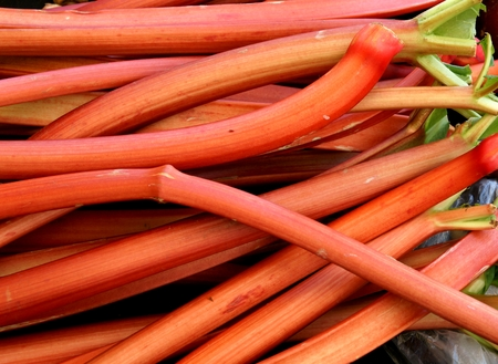 rheum: Rhubarb, Rheum rhabarbarum, orange red fleshy leaf stalks  petioles  eaten raw or cooked with sugar to make pies