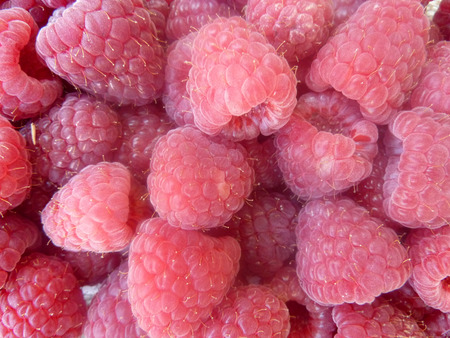 numerous: Raspberry, Red raspberry, European raspberry, Rubus idaeus, shrub producing red juicy fruits with hollow base and center with numerous small druplets, sweet and juicy