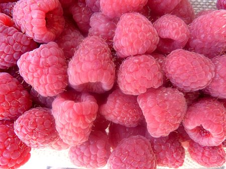 liczne: Raspberry, Red raspberry, European raspberry, Rubus idaeus, shrub producing red juicy fruits with hollow base and center with numerous small druplets, sweet and juicy
