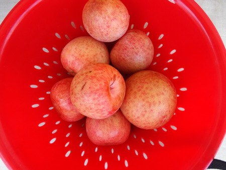 dandy: Pluot Dapple Dandy
