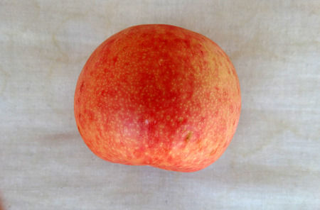 dandy: Pluot Dapple Dandy, Prunus Dapple Dandy, cultivar with large mottled pale green to yellow, red-spotted skin, firm pink or red juicy flesh, late ripening Stock Photo