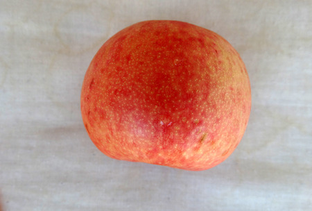 mottled skin: Pluot Dapple Dandy, Prunus Dapple Dandy, cultivar with large mottled pale green to yellow, red-spotted skin, firm pink or red juicy flesh, late ripening Stock Photo