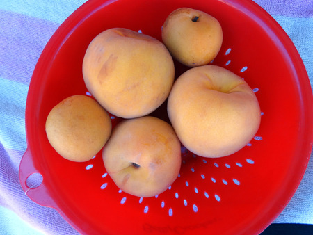differing: Similar looking 3 yellow peaches and 2 apricots, differing in taste and stone, smooth in apricots and wrinkled in peaches