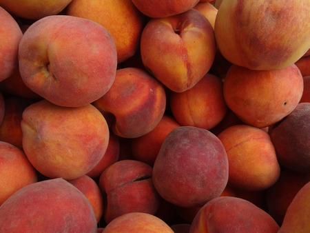 low cal: Prunus persica Cal Red Peaches, Cal Red Yellow Peaches, golden colored with red blush, yellow firm mildly sweet flesh with low acidity. Stock Photo