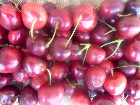 nearly: Cherry fruit, Prunus avium, small rosaceous fruit usually less than 2 cm in diam. in umbellate clusters, red to nearly blackish, similar color juicy sweet flesh and small stone. Stock Photo