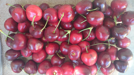usually: Cherry fruit, Prunus avium, small rosaceous fruit usually less than 2 cm in diam. in umbellate clusters, red to nearly blackish, similar color juicy sweet flesh and small stone. Stock Photo