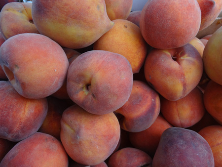 Prunus persica Cal Red Peaches, Cal Red Yellow Peaches, golden colored with red blush, yellow firm mildly sweet flesh with low acidity. Stock Photo