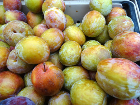 oblong: Flavor Grenade Pluot, interspecific plum hybrid cultivar with green oblong fruit with pink to red blush and crunchy apple like texture, sweet and flavory. Stock Photo