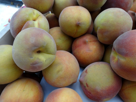 tinge: Sweet September Yellow Peach, Prunus persica, cultivar yellow firm skin with red tinge and yellow low acid sweet juicy flesh, late maturing cultivar.