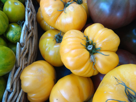 grooved: Solanum lycopersicum Persimon Tomato, cultivar with large yellow colored skin, often grooved at attachment end with yellow juicy flesh