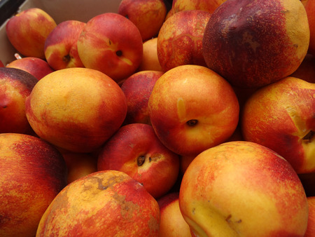 heavily: Prunus persica nucipersica Zee Fire Yellow Nectarine, cultivar with yellow skin heavily blushed with red and deep yellow sweet flesh, good flavor, clingstone Stock Photo