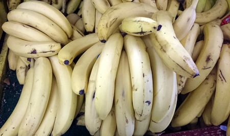 elongated: Banana Bunches, Musa sapientum, elongated silghtly curved fruits with light yellow skin and cream colored soft sweet pulp without seeds. Stock Photo
