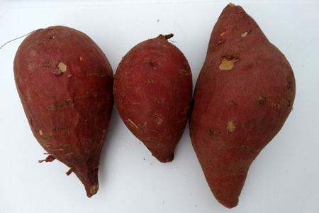 tuberous: Carolina Ruby Sweet potato, Red Yam, , Ipomoea batatas, a vine with tuberous roots used as vegetable, skin brown to reddish, flesh orange yellow, sweet, eaten baked as chaat Stock Photo