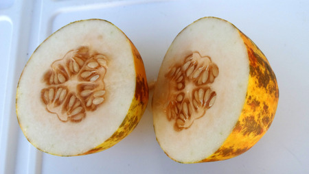 resembling: Dosakaya, Cucumis melo subs. agrestis var conomon, resembling golden cucumber but with green patches turning darker on ripening, flesh white, used in sambar and pachadi preparations