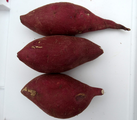 tuberous: Japanese Sweet potato, Ipomoea batatas, tuberous roots with red skin and creamish white flesh, mildly sweet, often used baked, chaat preparations Stock Photo