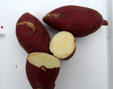 Japanese Sweet potato photo