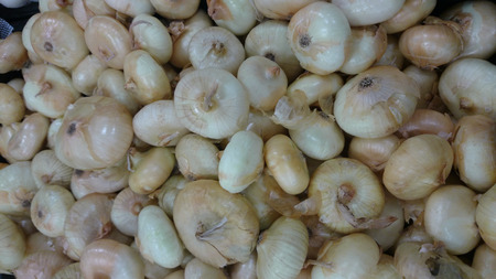 papery: Cippolini onion, Allium cepa, small sized Italian onions, white in color, slightly flattened with papery white to pale yellow skin and translucent white flesh, used in several cousines.