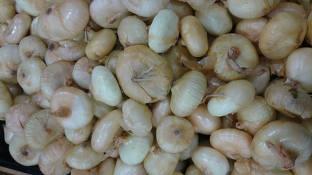 flattened: Cippolini onion, Allium cepa, small sized Italian onions, white in color, slightly flattened with papery white to pale yellow skin and translucent white flesh, used in several cousines.