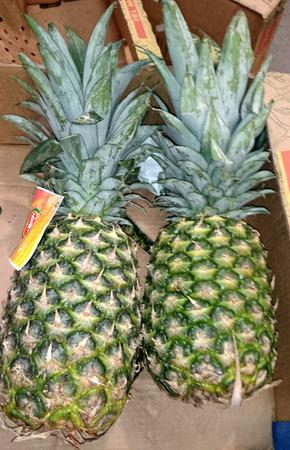 axis: Pi�a, Ananas comosus, multifruit tropical que consta de bayas carnosas coalescentes y eje, que se utilizan en los zumos, fruta fresca y confitada