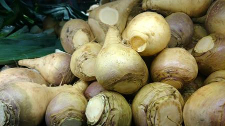 napus: Rutabaga, Swedish turnip, Brassica napus rapifera (Brassica napus napobrassica), root vegetable similar to turnip but with yellowish flesh, cooked as vegetable. Stock Photo