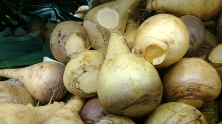 Rutabaga, Swedish turnip, Brassica napus rapifera (Brassica napus napobrassica), root vegetable similar to turnip but with yellowish flesh, cooked as vegetable. Stock Photo