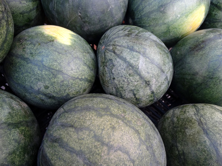 sized: Pink Flesh watermelon, Citrullus lanatus, cultivar with medium sized fruits, dark green skin and pink flesh, sweet and juicy