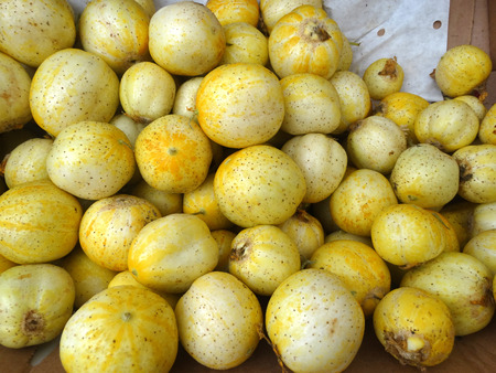 globose fruits: Lemon cucumber, Cucumis sativus Lemon, cultivar with small nearly globose lemon yellow fruits with tubercle remnants and pale greenish white flesh, used in salads.