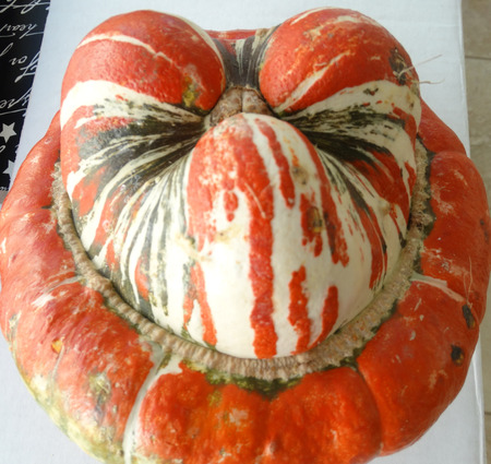 mottling: Turban squash, Cucurbita maxima, Turks turban, cultivar with turban like cap at flower end, having mottling of orange, white and green, used as ornamental and also as vegetable.