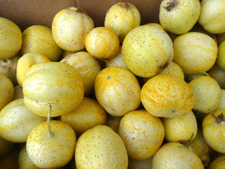 cucumis sativus: Lemon cucumber, Cucumis sativus Lemon, cultivar with small nearly globose lemon yellow fruits with tubercle remnants and pale greenish white flesh, used in salads.