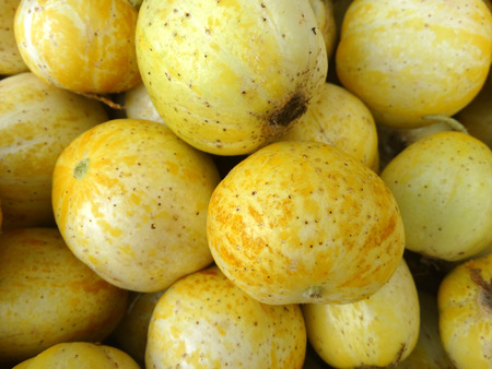 globose: Lemon cucumber, Cucumis sativus Lemon, cultivar with small nearly globose lemon yellow fruits with tubercle remnants and pale greenish white flesh, used in salads.