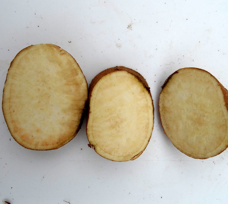 tuberous: Sweet potato, Ipomoea batatas, climber with tuberous roots having brown skin and white sweet flesh, used roasted, in chaats