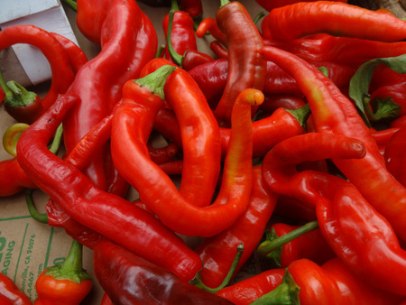 erect: Chille pepper Hot Portugal, Capsicum annuum longum, cultivar with sturdy erect plants producing elongated glossy bright red fruits. Stock Photo