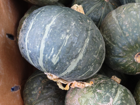 cucurbita: Kabocha squash, Cucurbita maxima, Japanese squash with hard dull green skin with white patches and intense orange colored flesh It is mostly roasted and tastes like roasted chestnuts