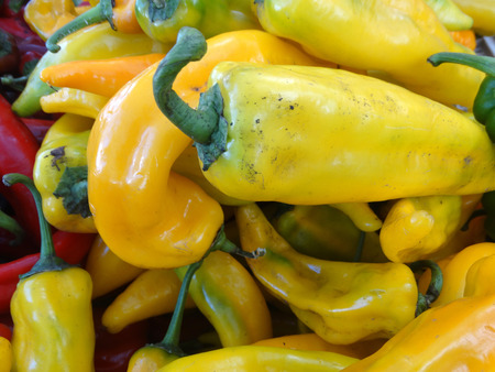 slightly: Sweet Italian Pepper, Capsicum annuum, cultivar with long conical fruits, sold green or pale yellow, popular in Italian cuisines, mostly fried, slightly sweet like bell pepper