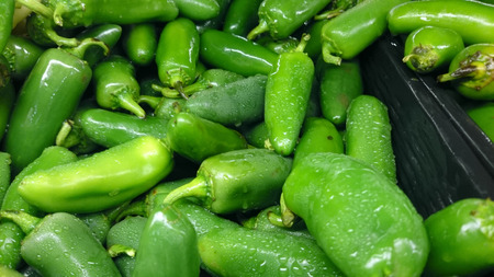 jalapeno pepper: Jalapeno pepper, Capsicum annuum, cultivar with conical dark green fruits with thick skin, mildly hot, used in pizzas and recipes Stock Photo