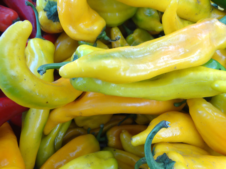 cuisines: Sweet Italian Pepper, Capsicum annuum, cultivar with long conical fruits, sold green or pale yellow, popular in Italian cuisines, mostly fried, slightly sweet like bell pepper