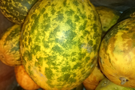 Dosakaya, Cucumis melo subs. agrestis var conomon, resembling golden cucumber but with green patches turning darker on ripening, flesh white, used in sambar and pachadi preparations