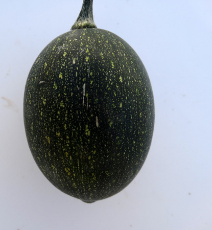 egg laying: Goblin eggs dark green, small ornamental fruits egg shaped with blackish green fruit with lemon yellow dots, with hard shell and the size of eggs, often used to induce hens for egg laying