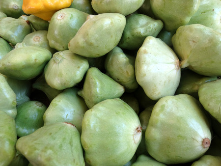 margins: Light green patty pan squash, Cucurbita pepo, cultivar with small dark green top shaped fruits with slightly winged margins, cooked as vegetable, Stock Photo