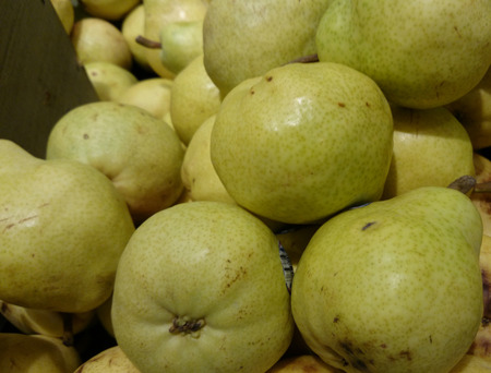 bell shaped: Bartlet pear, Pyrus communis, William pear, cultivar with bell shaped fruits with green skin turning yellow on ripening, eaten fresh or baked