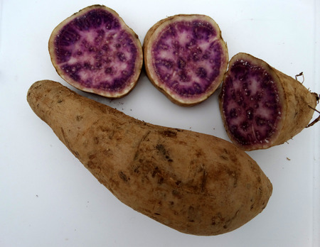 vitamin rich: Okinawa sweet potato, Ipomoea batatas Okinawa, cultivar with purple and pink patches in flesh, sweet, pleasant flavor and rich in vitamin A, B6 and C.
