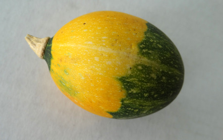 upper half: Goblin eggs double color, small ornamental fruits egg shaped golden yellow skin n lower half and dark green in upper half with lemon yellow dots, with hard shell and the size of eggs, often used to induce hens for egg laying