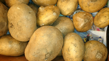 tuberous: Jicama, Pachyrhizus erosus, Mexican turnip, tuberous roots of vine, mostly globose, yellowish brown outside, pale cream flesh, crisp like potato. cooked in soups or stirfried Stock Photo