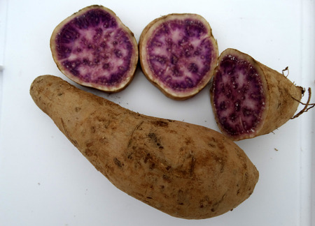 pleasant: Okinawa sweet potato, Ipomoea batatas Okinawa, cultivar with purple and pink patches in flesh, sweet, pleasant flavor and rich in vitamin A, B6 and C.