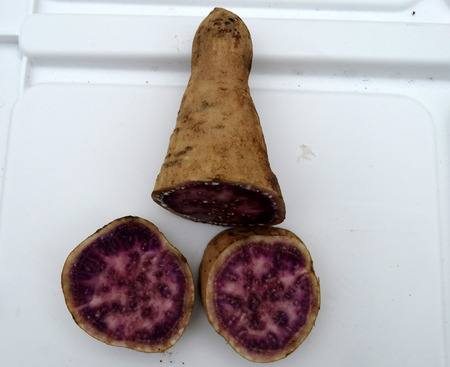 rich flavor: Okinawa sweet potato, Ipomoea batatas Okinawa, cultivar with purple and pink patches in flesh, sweet, pleasant flavor and rich in vitamin A, B6 and C.