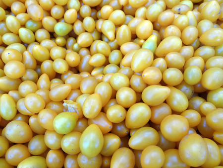 vine pear: Yellow Pear tomato, Solanum lycopersicum, vine tomato with pear shaped yellow fruits less than 5 cm long, suitable for salads without slicing