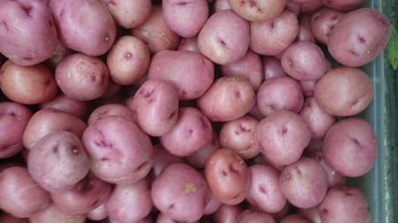 Red potato close up  photo