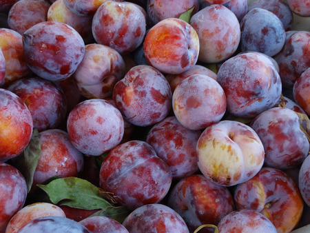 Joanna Red Plum, cultivar with large sized fruit with red skin over yellow base with whitish bloom and pale yellow flesh
